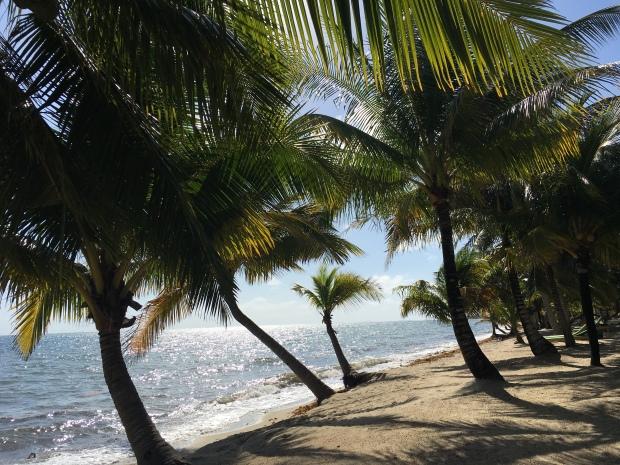 Belize, Natur, Tiere, Tierwelt, Dschungel, Lebewesen, Zentralamerika, Einstieger, Einsteigerland, Lateinamerika, Anfänger, Strand, Palmenstrand, einsam, Placencia