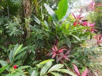 Pfanzenwelt, Belize, Flora, Lateinamerika, Zentralamerika, Natur, Dschungel, Wald, Tropen