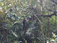 Belize, Südamerika, Lateinamerika, Zentralamerika, Reise, Einsteigerland, Anfänger, Reiseziel, Was kann man erwarten, Tierwelt, Natur, Essen, Höhlen, Dschungel, Inseln, Korallenriff, Wassersport, wandern, Zoo