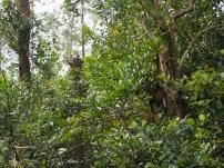 Belize, Sehenswürdigkeit, Reise, reisen, Reiseblog, Attraktion, was erwartet mich, Lateinamerika, Einsteigerland, Südamerika, Zentralamerika, Anfänger, Einsteiger, Land, Dschungel, Wald, Affe