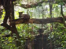 Belize City, Belize Zoo, Zentralamerika, Lateinamerika, Südamerika, Reise, reisen, Einsteiger, Anfänger, Einsteigerland, Tipps, Sehenswürdigkeiten, was erwartet mich, worauf muss ich achten, Sehenswert, Tourist, Tourismus, Kultur, Zoo, Dschungel