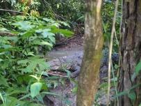 Belize, Belize City, Zoo, Krokodil, Zentralamerika, Lateinamerika, Südamerika, Reise, reisen, Einsteiger, Anfänger, Einsteigerland, Tipps, Sehenswürdigkeiten, was erwartet mich, worauf muss ich achten, Sehenswert, Tourist, Tourismus, Historisch, Kultur, Zoo, Dschungel