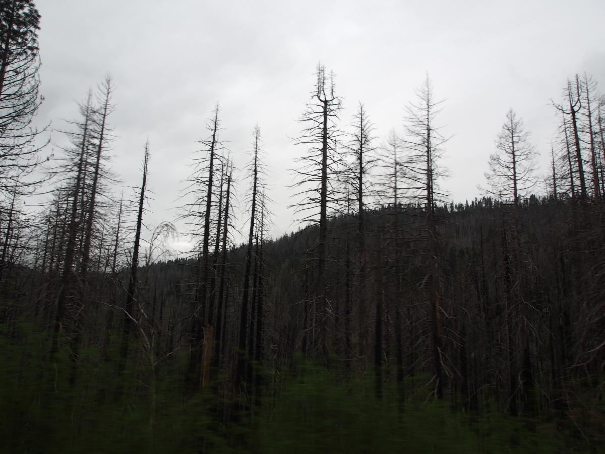 Waldbrandschäden, Schäden, Waldbrand, Yosemite Nationalpark