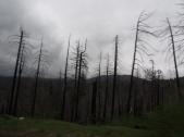 Waldbrandschäden, Yosemite, Nationalpark, Kalifornien
