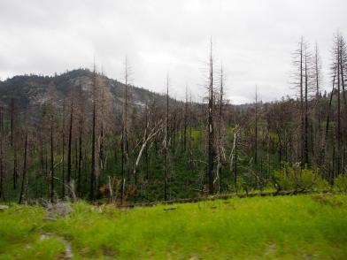 Waldbrandschäden 2013