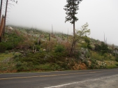 Waldbrandschäden, Yosemite, Kalifornien