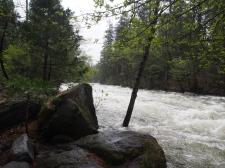 Merced River, Yosemite, Nationalpark, Fluss, Fluß, Kalifornien, USA