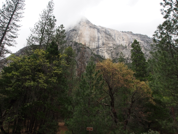 El Capitan, Yosemite, Nationalpark. Granit, Felswand, Kalifornien, USA