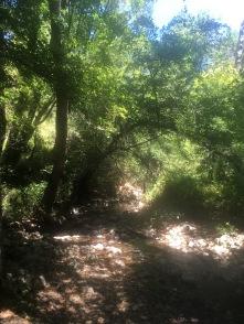 Kalifornien hat Wälder